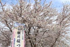 『2020.3.27桜づつみ(4)』の画像