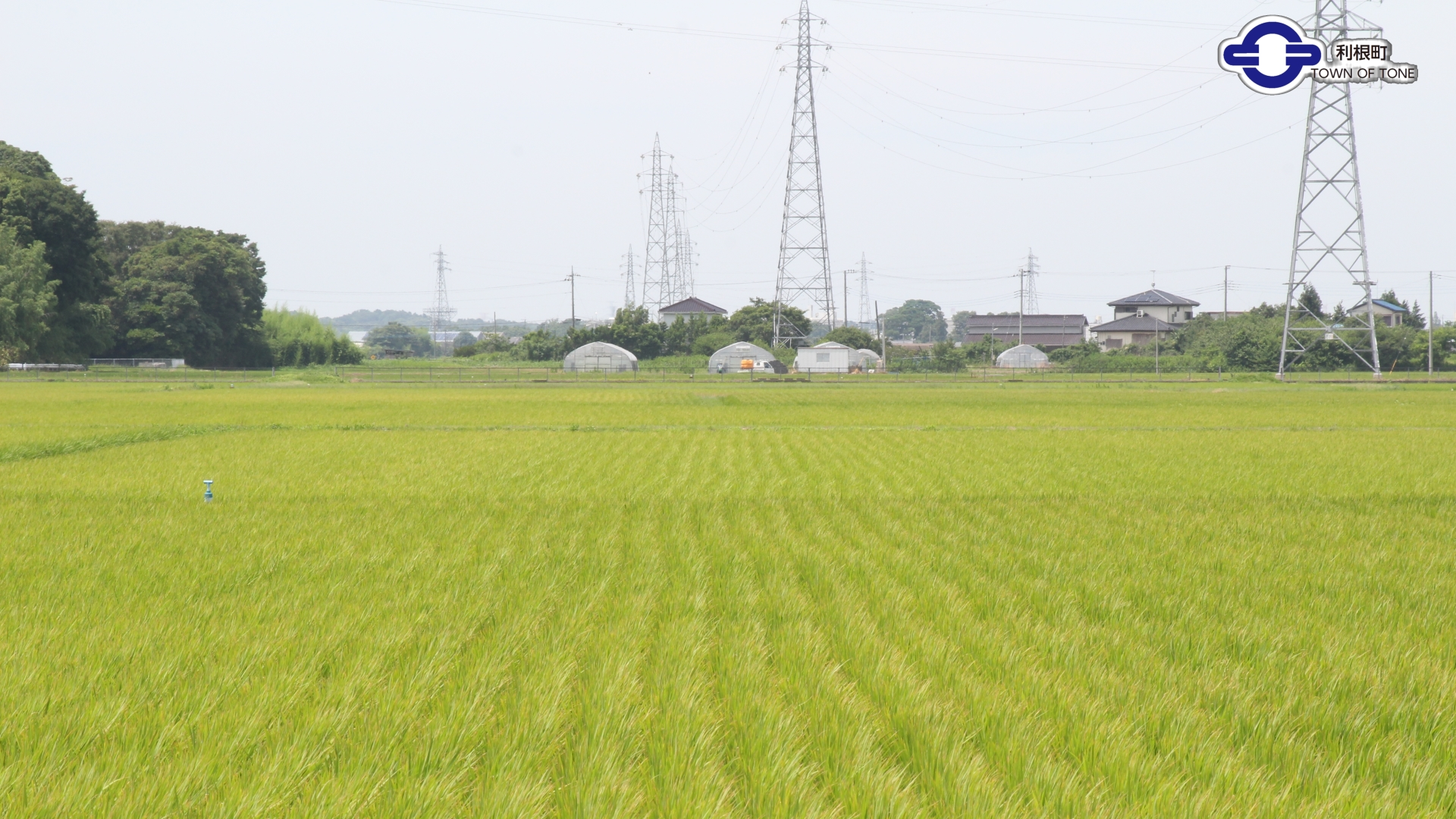 『田んぼ』の画像