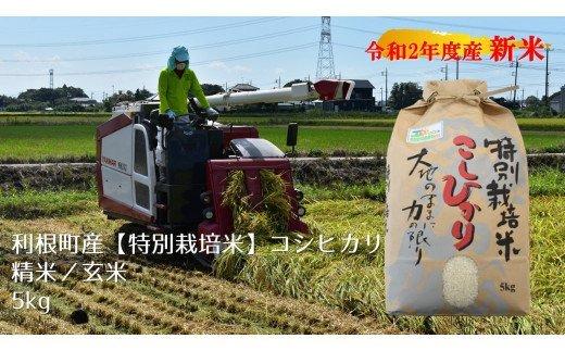 『『『『利根町コシヒカリ特別栽培米』の画像』の画像』の画像』の画像