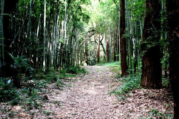 『鎌倉街道(FCロケ地)』の画像