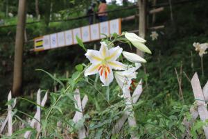 『大平野生植物園』の画像