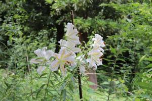 『大平植物園-1』の画像