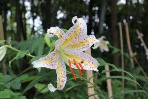 『大平植物園--4』の画像