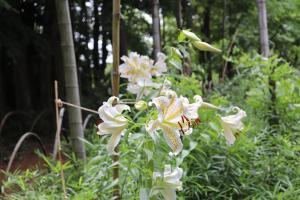 『大平植物園-5』の画像